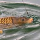 Fishing Vacation at Purbasthali