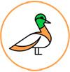 Purbasthali Birds